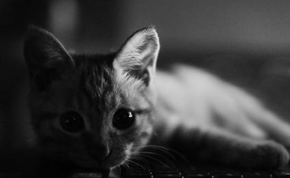 kitty_by_zhangzongzheng-d5kuvog