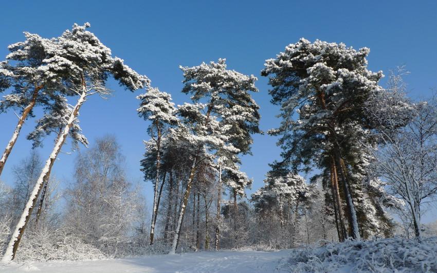 153 dias en invierno: