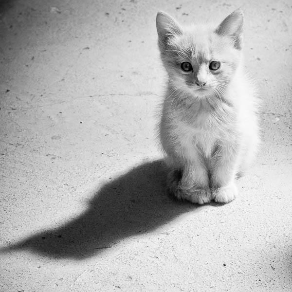gatos anonimos 2 (2)