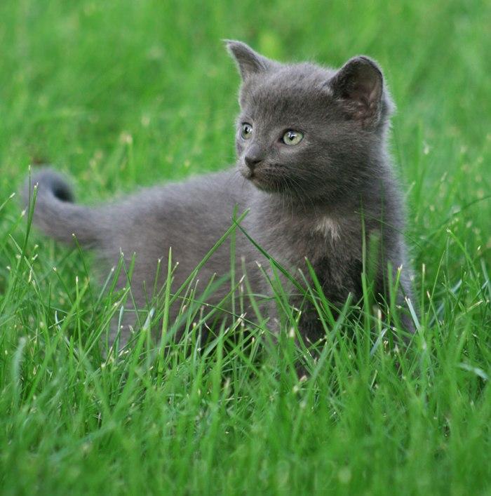 gatos anonimos 1 (1)