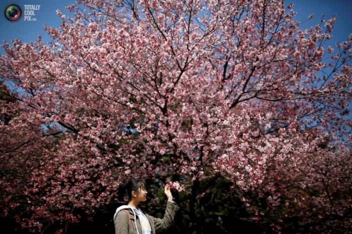 Primavera en flor (10)