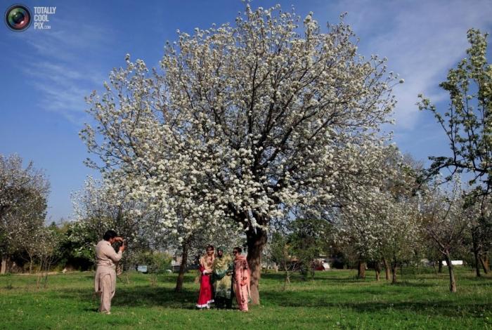 Primavera en flor (11)