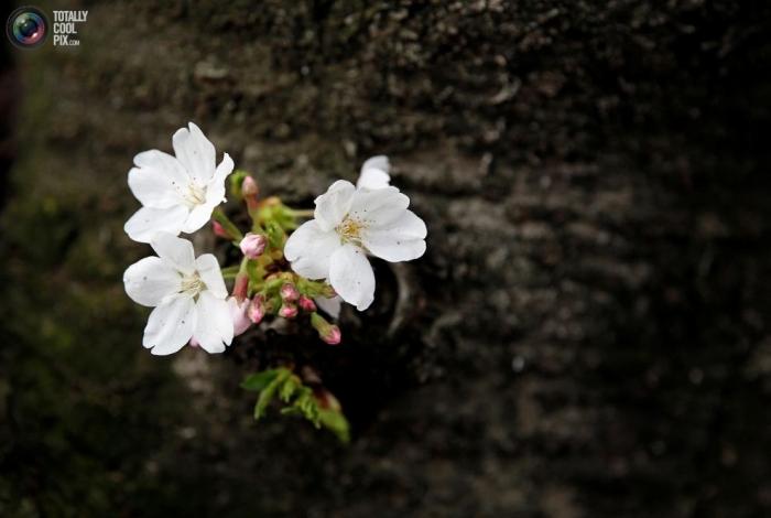Primavera en flor (18)