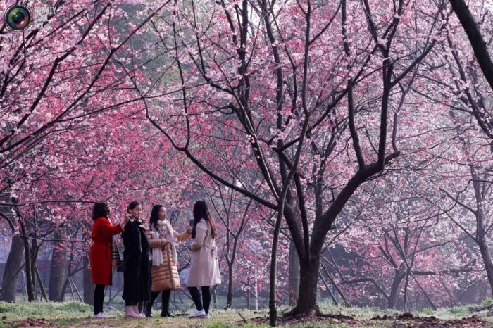 Primavera en flor (3)
