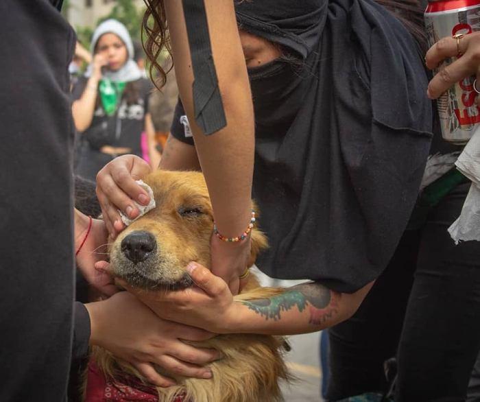 Chile en dictadura (8)